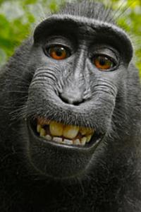 singe-selfie